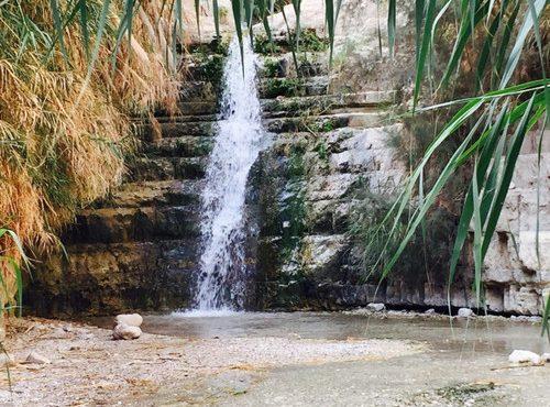 Kleiner Wasserfall und Pflanzen